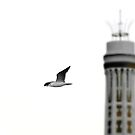The seagull and the chimney  by Barbara  Corvino