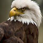 Look of Eagles by kkgivens