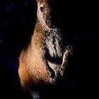 "Inhabitant of the ""Serengeti of Tasmania"",  by Tim O'Neil"