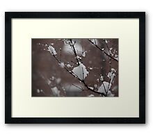 Snow on a branch Framed Print