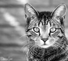 Kostya the Cat by dimalynn