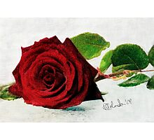 Digital Paintings: The Rose Photographic Print