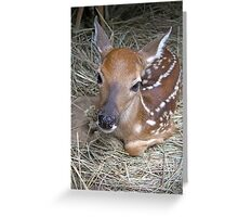 "The ""CUTE""  In Cuteness! Greeting Card"
