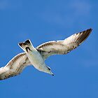 Gull in Flight by Donna Adamski