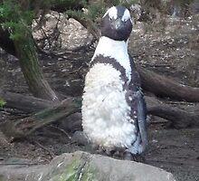 Posing Penguin on the Rocks by karenuk1969