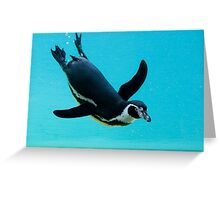 Magellanic Penguin (Spheniscus magellanicus) Greeting Card