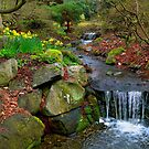 Spring in Beacon Hill Park by VickiOBrien