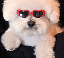 Maggie The Bichon Frise  Angel by Judy Grant