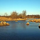 Late Winter Wetlands by Tracy DeVore