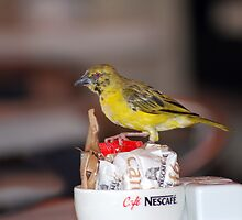 Cute little sugar thief by laureenr