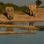 Reflections of Botswana by Cal Gordon