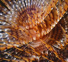 Sabellid worm by Erik Schlogl