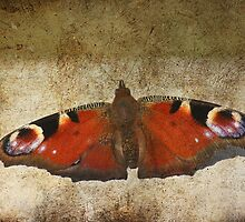 Fluttterby Butterfly by Pamela Jayne Smith
