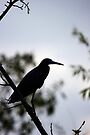 Little Blue Heron - Silhouette by Stephen Beattie