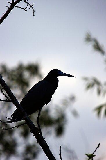 Little Blue Heron - Silhouette by Stephen Beattie