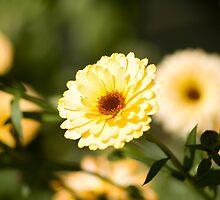 garden flowers by Gracie Borgnet