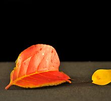Fallen Leaves by carlosporto