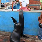 Fish Market High Five by Sue  Cullumber
