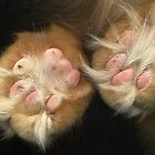 Paws for Thought by TheWalkerTouch