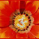 Red Om Flower by Jen  Govey