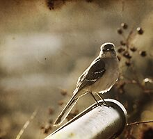 sepia bird by Shannon Holm