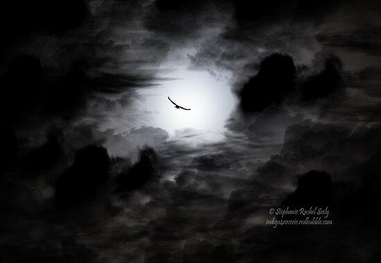 Freedom by Stephanie Rachel Seely