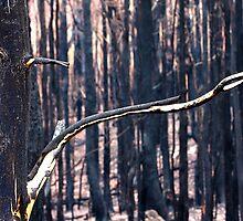 Forest Destruction. by trevorb