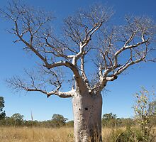 Boab Tree by Richard Cassar