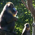 Mandrill by heyitsmefi