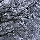 Trees in Winter by NicolaM