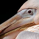 Pelican Resting by Bobby McLeod