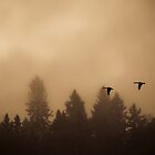 Some Dreams Take Flight by Jessica Hardin