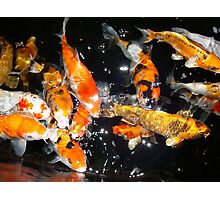 Hungry Koi Photographic Print