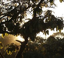 Stem and leaves outlined by the shine of sunrays by ashishagarwal74