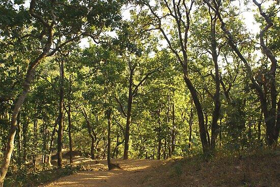 A path through a sparse forest and trees by ashishagarwal74
