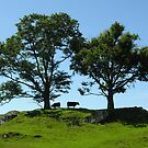 Pines & cows in a craggy hill-top meadow against a summer sky, English Lake District by Philip Mitchell