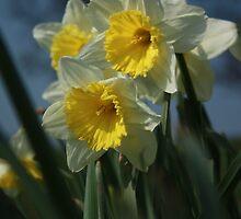 not long 'till Easter by BettinaSchwarz