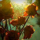 Flower III by trbrg