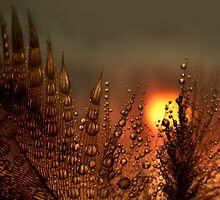Feather Dew at Dawn by Gazart