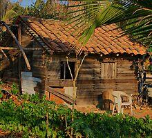 Mexico Beach House by Barbara  Brown