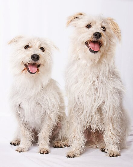 Milo & Coco by Sharon Hammond