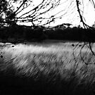 evening grass by peteroxcliffe