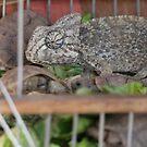 Chameleon  by HelenBanham