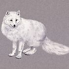 arctic fox by Reet Rea