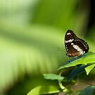 Butterfly 001 by James Troi