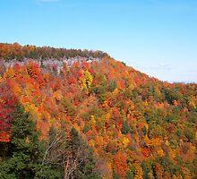 John Boyd Thacher State Park by Dandelion Dilluvio