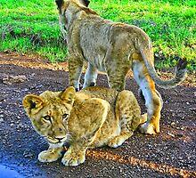 Cute Kittens by vadim19