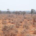 young giraffes by karen peacock
