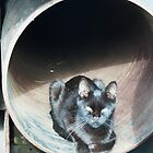 kitty in a tunnel by Taniah