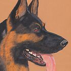 german shepherd by Reet Rea